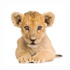 реального Animal бесплатно icon