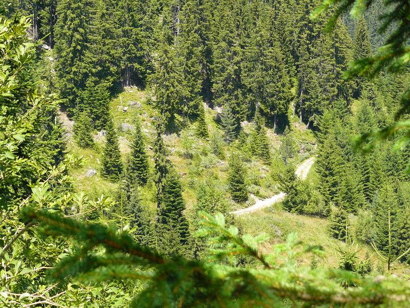 Горски път в Родопите