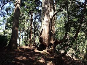 周辺には巨木が多い