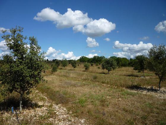 Vente terrain 54425 m2