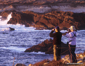Photo: Searching for seabirds at Pt. Lobos, Monterey County.
