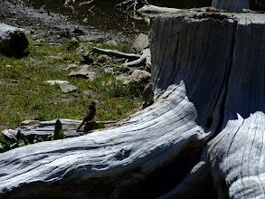 Photo: Birds on a stump