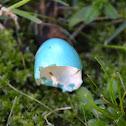 Robin's eggshell