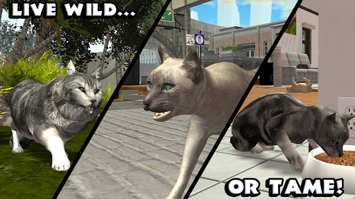 Download Ultimate Cat Simulator MOD APK 3