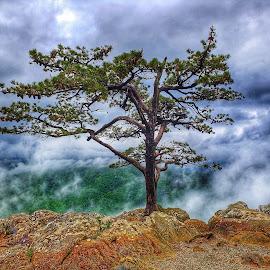 Centennial Tree  by Robin Fitzgerald - Uncategorized All Uncategorized