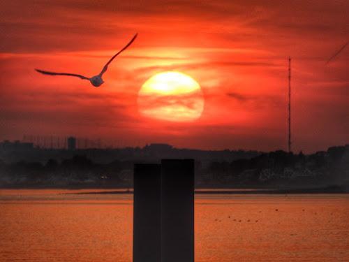In flight by Ann Goldman - Novices Only Wildlife ( bird, clouds, flight, sunset, bayside, marina, sun,  )