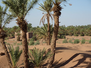 "Photo: Marabout Sidi Khalil met een beginnend ""groene muur"""