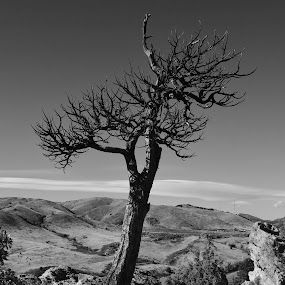 Stark by Michelle Bergeson - Landscapes Mountains & Hills ( hills, distance, tree, black and white, dead,  )