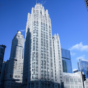 Chicago Tribune by Bre Marie - City,  Street & Park  Skylines ( skyline, chicago tribune, chicago, downtown )