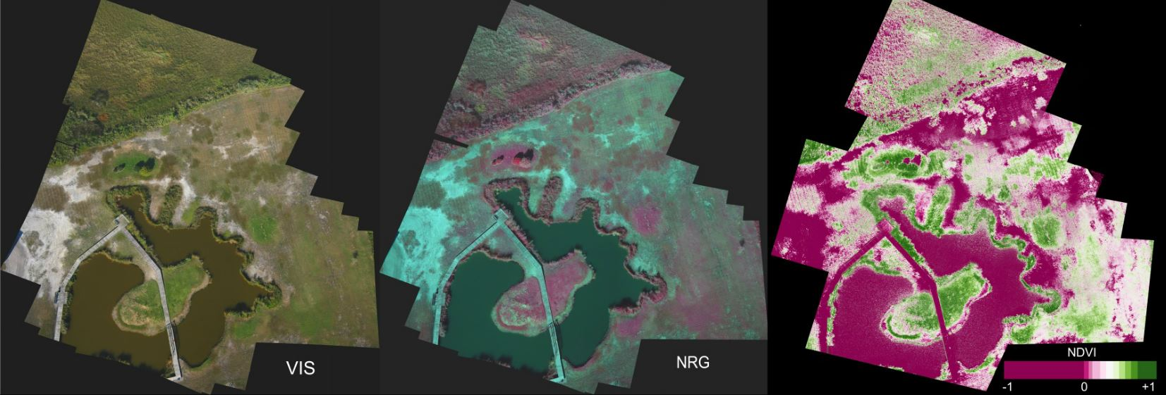 Photo: Normal color photo (VIS), false color infrared image (NRG), and normalized difference vegetation index (NDVI) images of a yard, pond and adjacent saltmarsh in coastal Louisiana. Aerial images were taken by a pair of synchronized cameras lofted by a kite and each is stitched from 15-20 images. NRG and NDVI images were derived from two photos, one taken by a normal camera and one taken by a camera modified to record only infrared light. Healthy plants typically have NDVI values between 0.1 and 0.9. Note that bare soil, dead vegetation, and boardwalks have very low NDVI values because they are not photosynthetic.