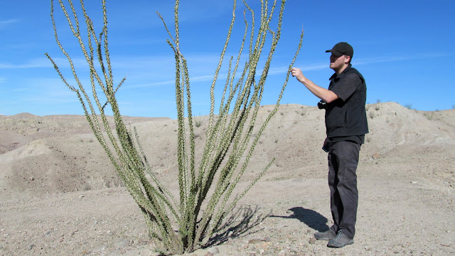 Touching the ocotillo