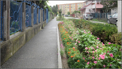 Photo: Nalba de gradina (Lavatera trimestris-Tanagra) - din Turda, de pe Str. Trandafirilor - 2018.07.08