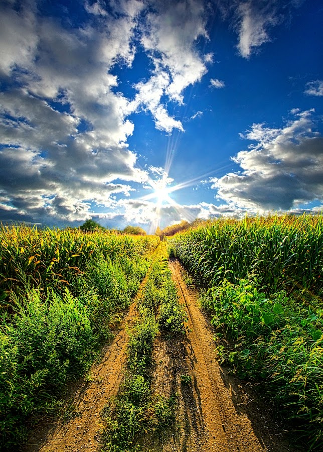 Between the Rows by Phil Koch - Landscapes Prairies, Meadows & Fields ( summer. spring, vertical, photograph, farmland, yellow, storm, leaves, love, nature, autumn, snow, flowers, flower, wind, orange, twilight, agriculture, horizon, portrait, environment, winter, season, national geographic, serene, floral, inspirational, wisconsin, natural light, phil koch, spring, sun, corn, photography, farm, ice, horizons, rain, inspired, clouds, office, green, dirt road, scenic, morning, wild flowers, field, red, blue, sunset, fall, peace, meadow, earth, sunrise, landscapes )