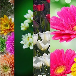 Flowers  wallpaper by Wallpix