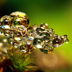 Clusters Of Droplet by Joseph Goh Meng Huat - Nature Up Close Flowers - 2011-2013 ( plant, macro, droplet, singapore, droplets )