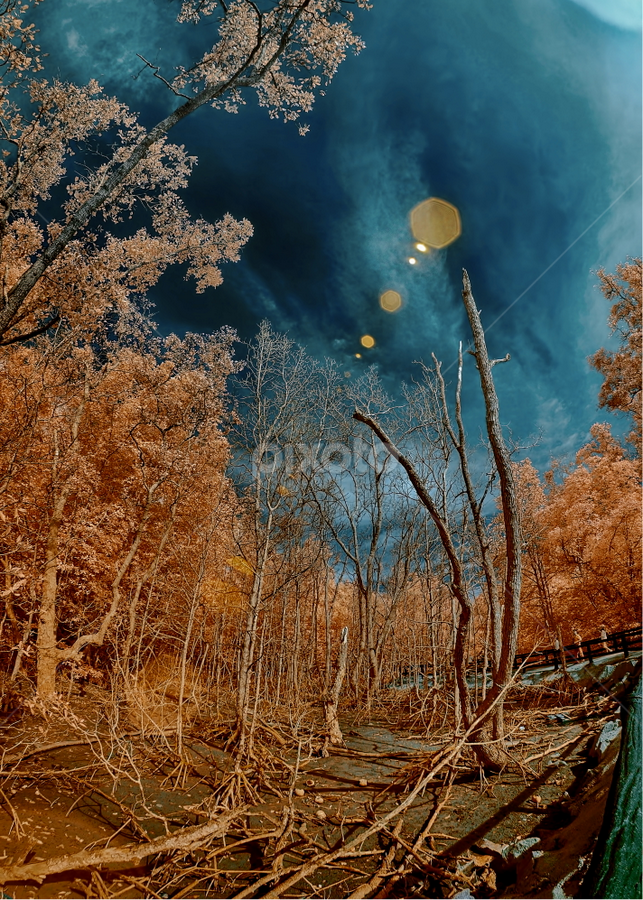 by Jimmy Chiau - Nature Up Close Trees & Bushes ( nature, infrared, sitiawan, trees, malaysia )