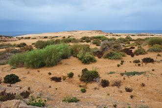 Photo: TAMRI - malgré un temps quasi breton (aussi humide, mais plus chaud) le littoral garde de jolies couleurs