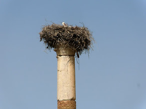 Photo: Volubilis - Stork's nest at the Capitol ........... Ooievaarsnest in het Capitool