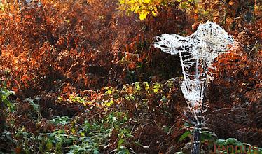 Photo: Norddeutscher Urwald im Herbst
