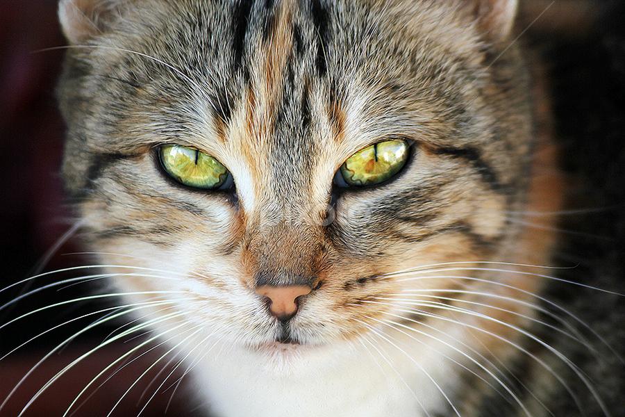by Lis Ruas - Animals - Cats Portraits