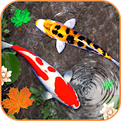 3D Koi Fish Wallpaper HD - 3D Fish Live Wallpapers
