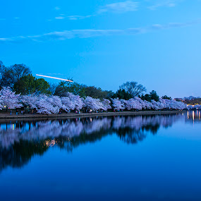Do you See It by John Goff - Landscapes Starscapes ( cherry blossem festival )