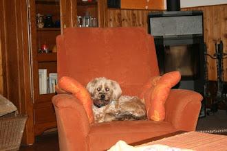Photo: Gasthunde lassen es sich gutgehen :-)