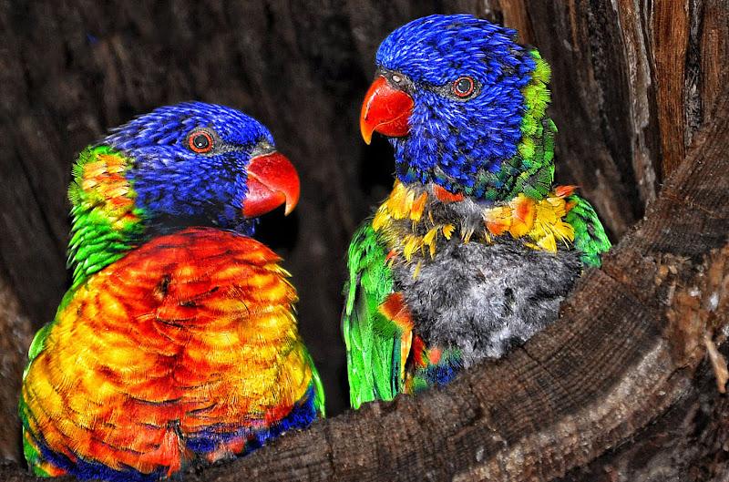 Multicolor brillante a Marano di Diana Cimino Cocco