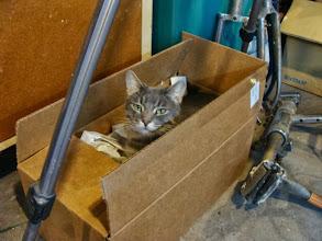 Photo: Box Cat.