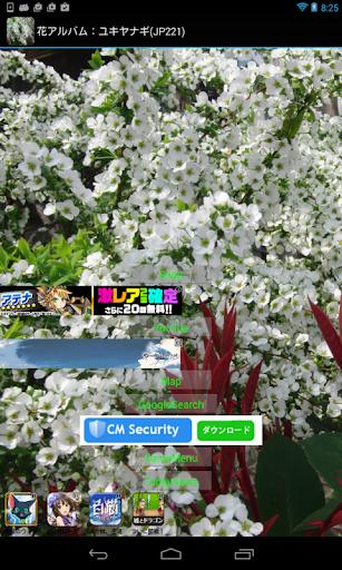 花アルバム:ユキヤナギ JP221