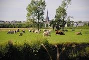Коровы - неотъемлемая часть норманских пейзажей