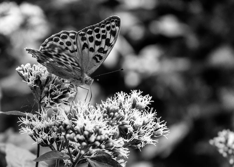 Butterflower di Aluc83