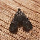 Black Duckweed Moth - 4754