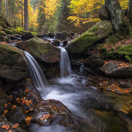 White Creek by Radek Lauko - Landscapes Waterscapes ( forest, creek, leaves, wet rocks, autumn, water,  )