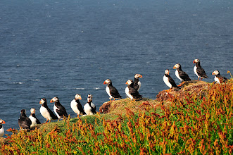 Photo: Puffins on Mykines