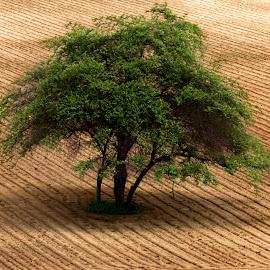 Lonely tree by Aung Kyaw Soe - Landscapes Prairies, Meadows & Fields (  )
