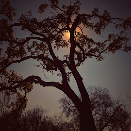 Warmth by Bill Kratz - Nature Up Close Trees & Bushes ( reflect, overcast, oak tree, sunglow, grey )