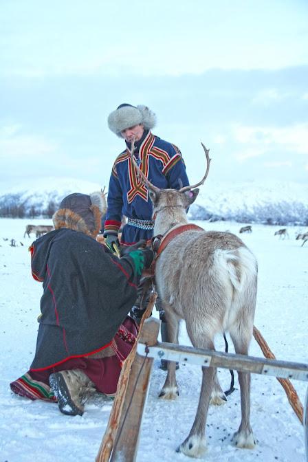 Descobrindo a cultura SÁMI com CRIADORES DE RENAS em Tromso | Noruega