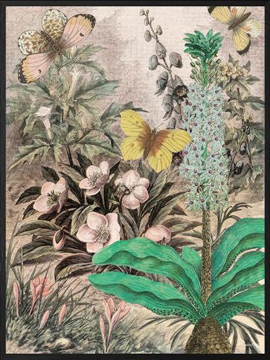 Botanic poster 50x70