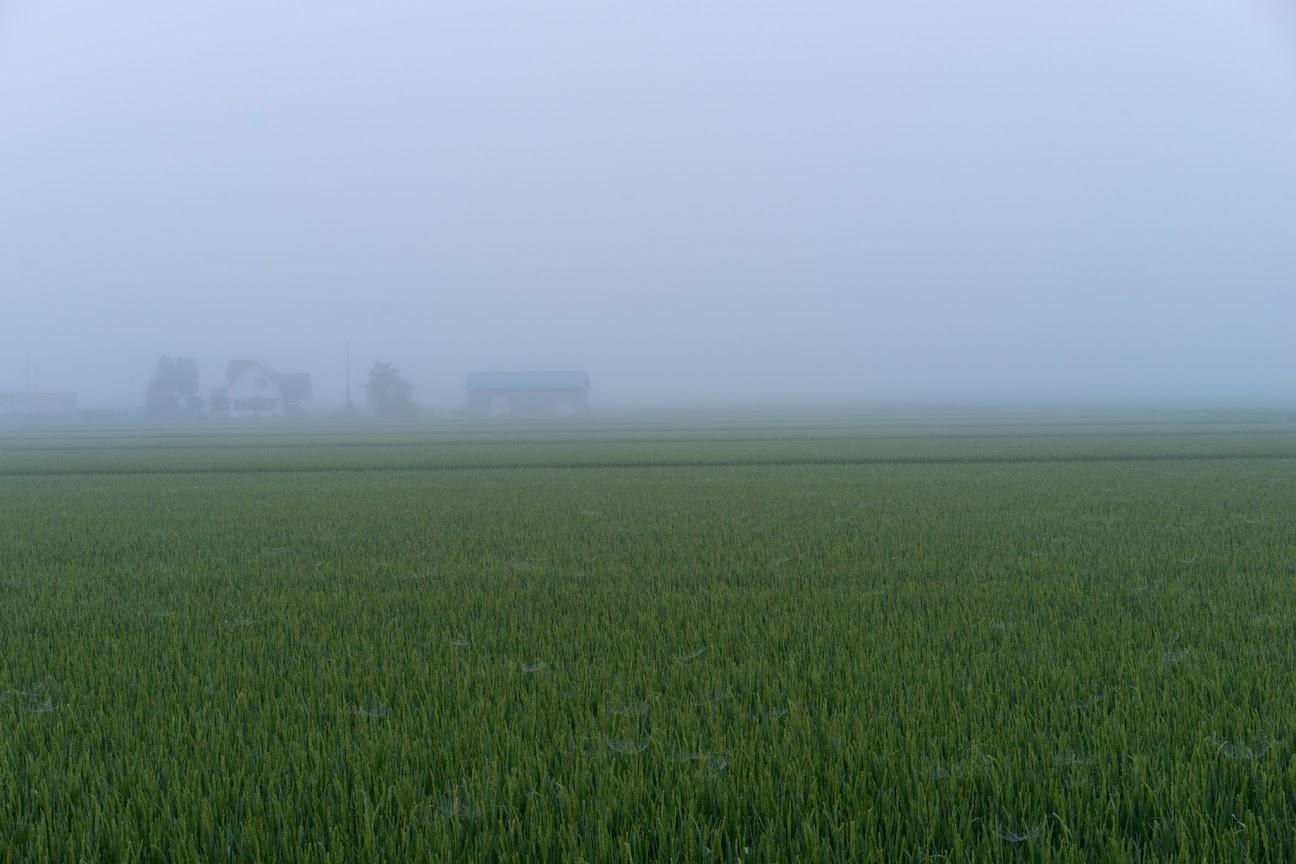 朝霧に包まれた田んぼ