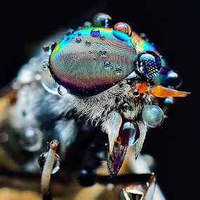 by SweeMing YOUNG - Animals Insects & Spiders ( tiny, macro, fly, creature, bug, insect, small, closeup, animal )