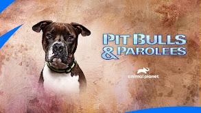 38 Dogs and 1 Backyard thumbnail