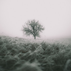 Beautiful Darkside by Corey Gross - Black & White Landscapes ( field, winter, tree, frost, south dakota )