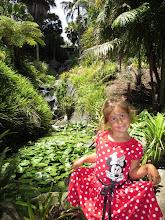 Photo: San Diego Botanical Gardens - At the waterfalls