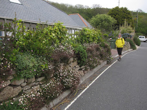 Photo: ... though she likes the Cornish wall.