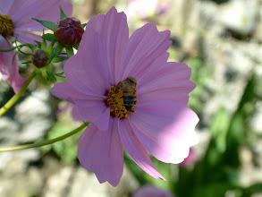 Photo: Un'ape al lavoro