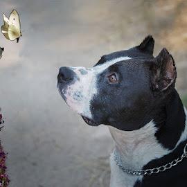 Mirando las mariposas by Jomabesa Jmb - Animals - Dogs Portraits (  )
