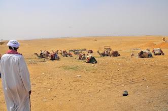 Photo: Camel fleet