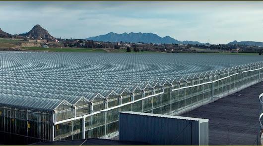 La holandesa Cualin proyecta llevar gas natural hasta invernaderos de Antas