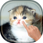 Magic Touch - Cute Cat